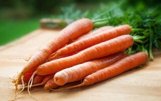Почему растрескивается морковь на грядке