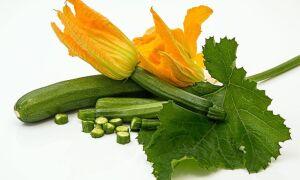 Почему кабачок горький после приготовления и можно ли его употреблять в пищу