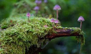 Почему грибы выделили в самостоятельное царство